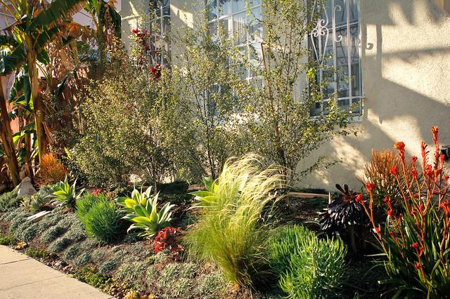 Spanish Drought Tolerant Garden Contemporary