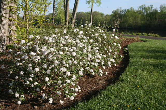 9 Deer Resistant Flowering Shrubs To Plant This Fall