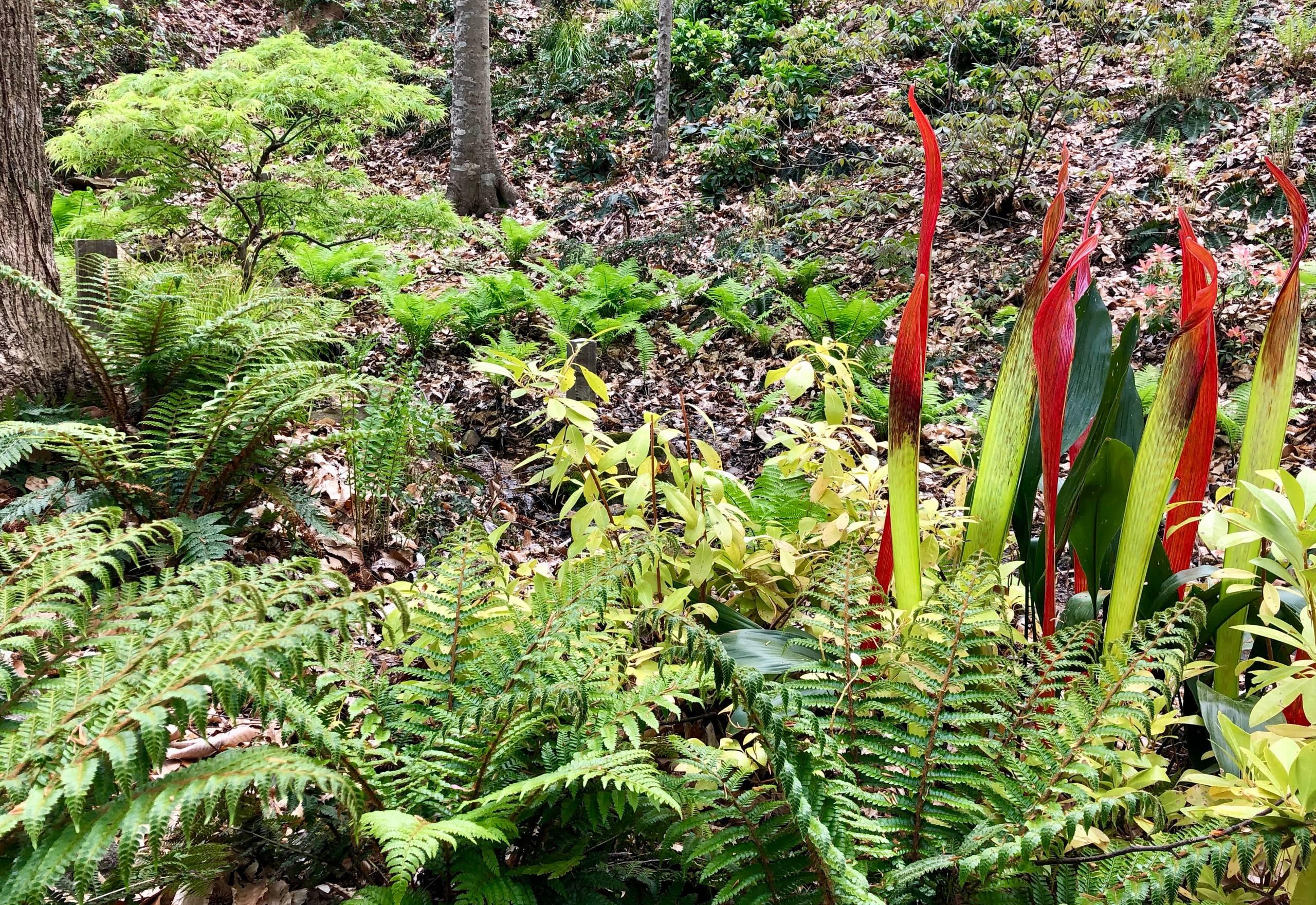 Spring 2019 in the fern glen.
