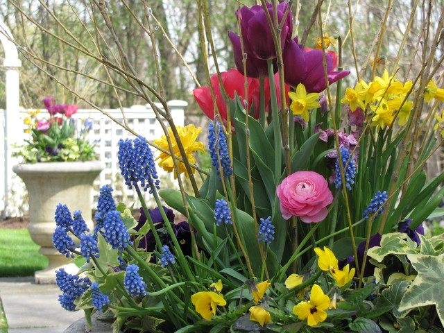 Spring Annuals traditional-landscape