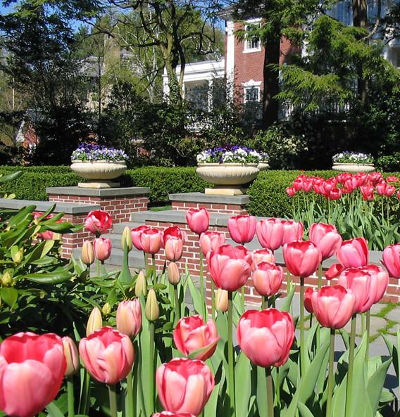 Spring bulb design traditional landscape other metro for Spring bulb garden designs