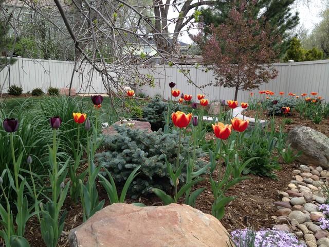 Spring Bulb Gardens Transitional Landscape Denver