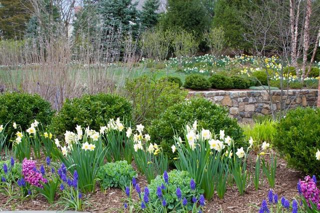 Spring Flowering Bulbs In Shrub Border Traditional