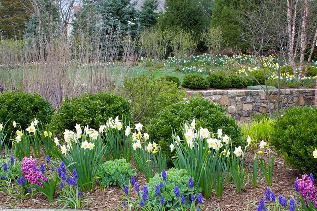 Garden Design With Shrubs : Spring flowering bulbs in shrub border traditional landscape