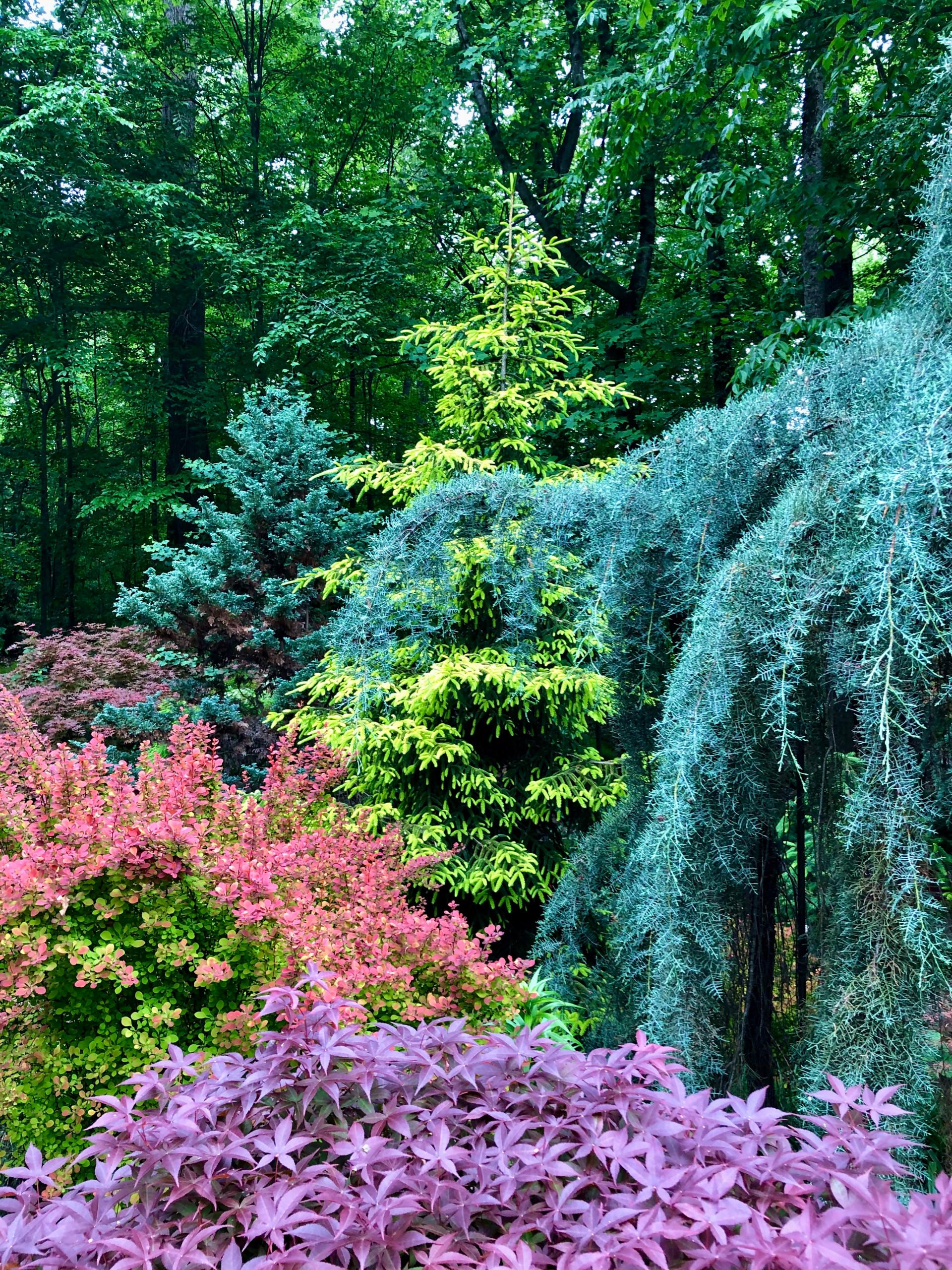 Spring foliage color