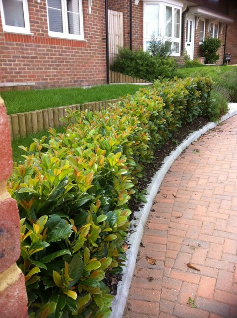 traditional landscape Stepover Hedging