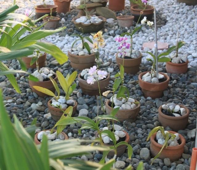 Stone Orchid Garden Tropical Landscape