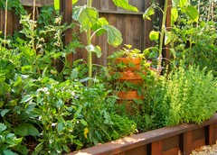 How to Squeeze a Vegetable Patch into a Small Garden