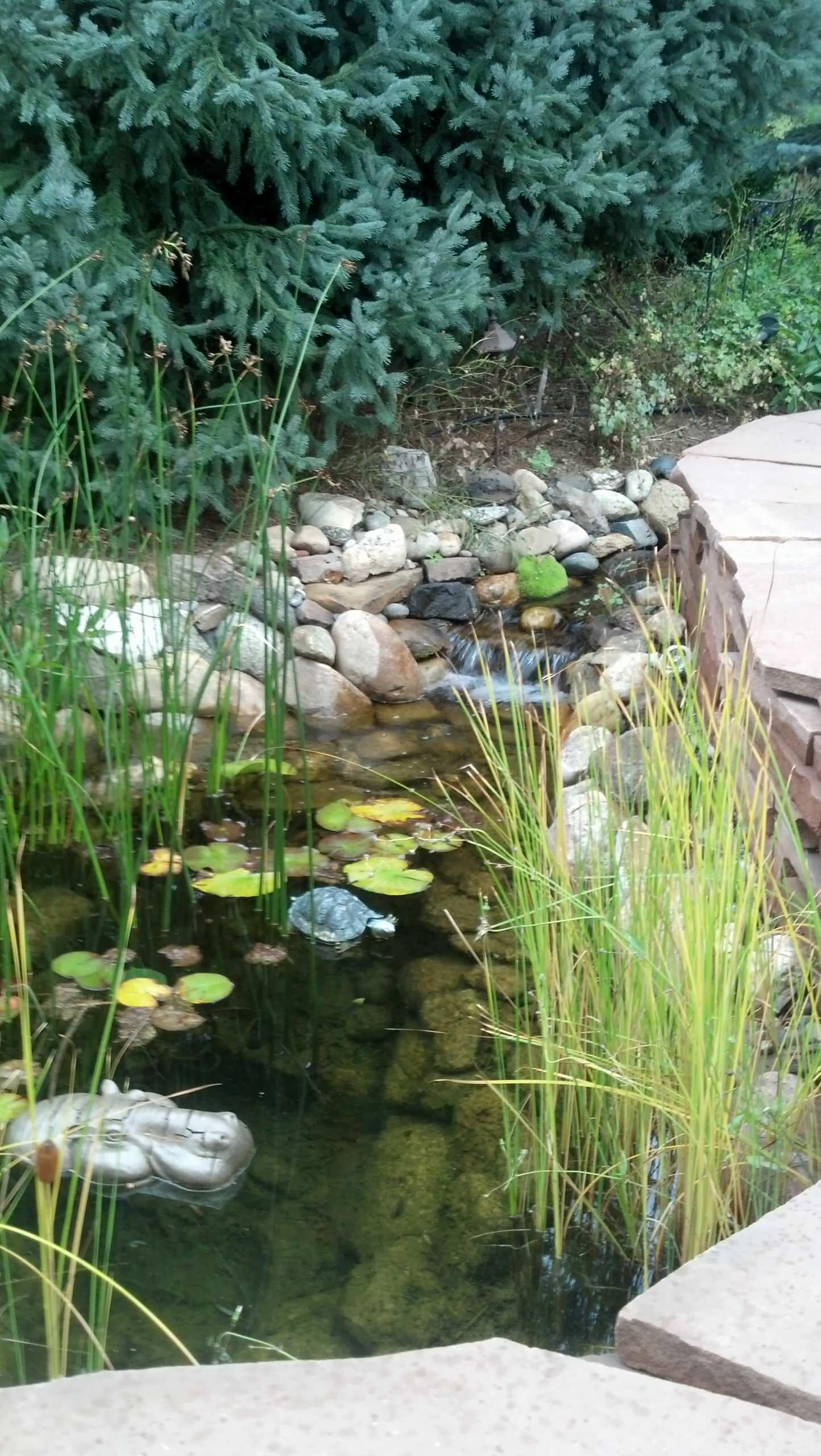 Stream to pond, the neighbors love the sound also