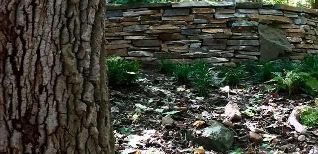 Study in Texture:  Tree and Stone rustic-landscape