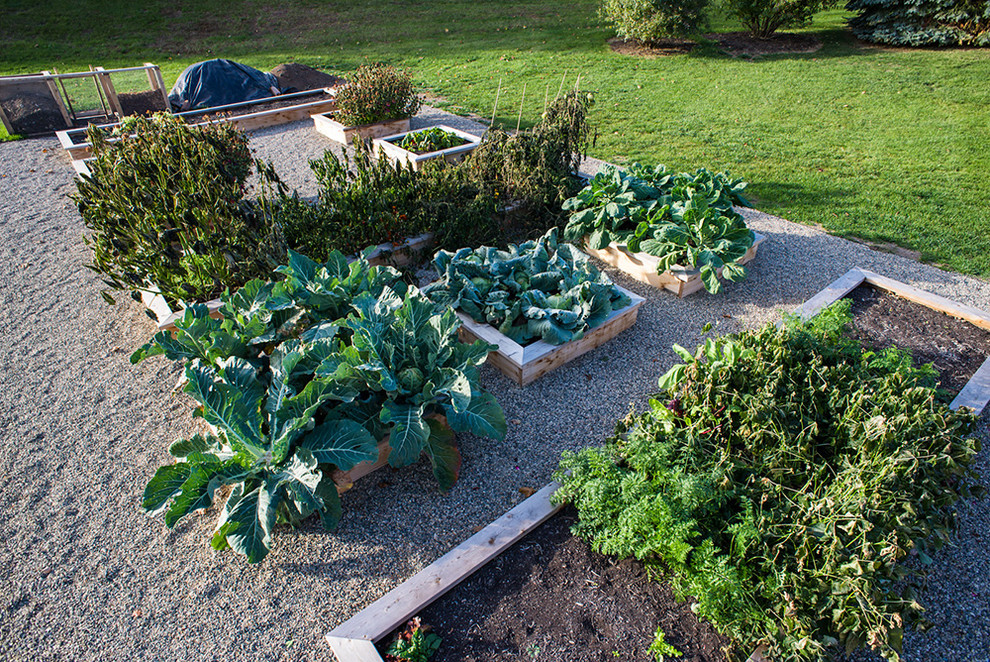 Photo of a traditional vegetable garden landscape in Detroit.
