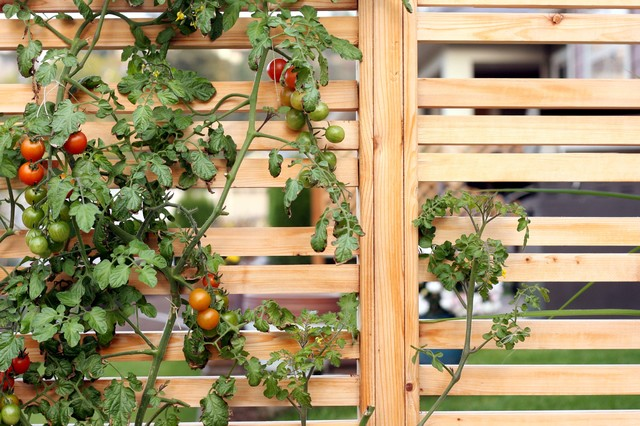 Suburban Harvest contemporary-landscape