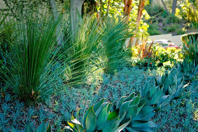 Succulent Garden Agaves Sculpture Garden Drought Tolerant Garden  Contemporary Landscape