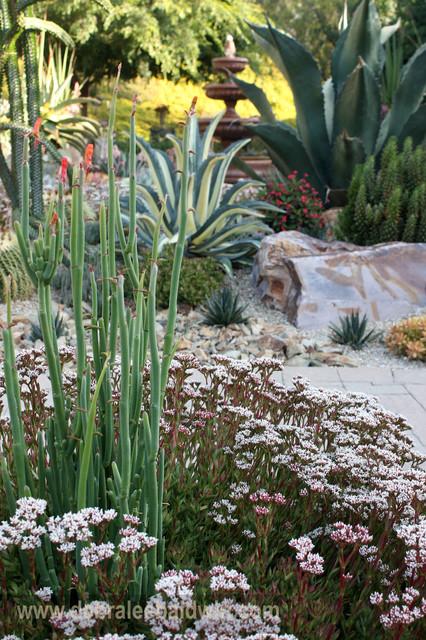 Succulent garden vignettes eclectic-landscape