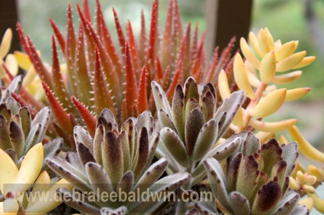 Succulent garden vignettes eclectic landscape san diego by debra lee baldwin - Succulent container gardens debra lee baldwin ...