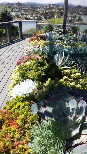 Succulent Gardens and Pots eclectic-landscape