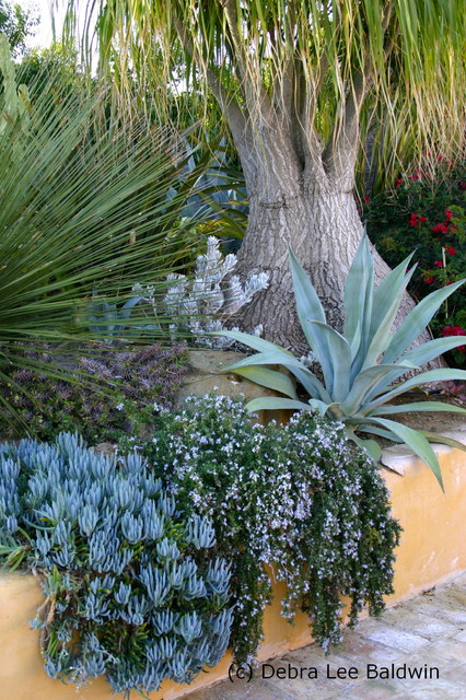 Succulent Gardens Eclectic Landscape San Diego besides Kitchen Crema Marfil Marble Traditional Kitchen New Orleans furthermore Icon Panels additionally Dry River Bed Rustic Landscape New York as well Landscaping Project 4. on rancho santa fe landscape design