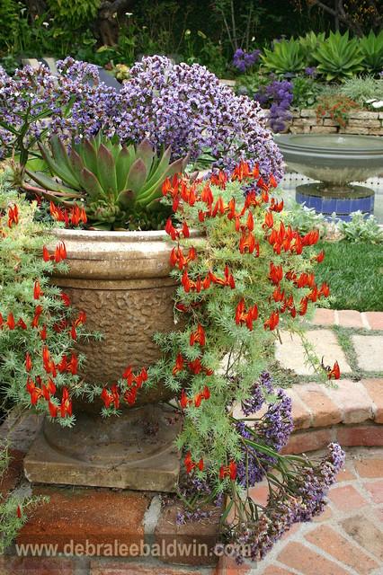 Succulent gardens eclectic landscape san diego by debra lee baldwin - Succulent container gardens debra lee baldwin ...