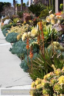 Succulent Gardens Eclectic Landscape San Diego By