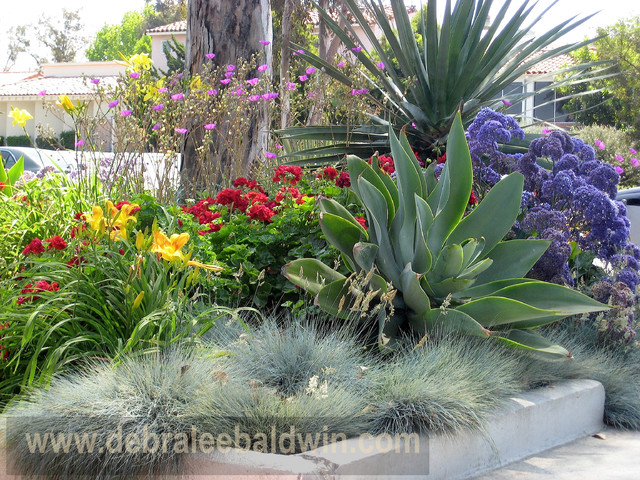 Succulent Gardens Eclectic Landscape San Diego By