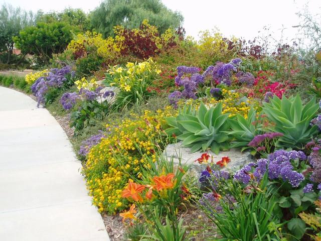 Succulent Gardens Mediterranean Landscape San Diego