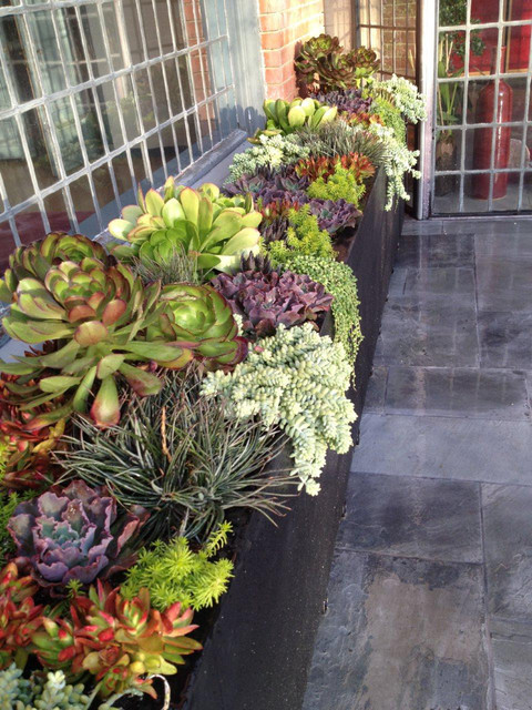 Succulent Landscapes Gardens Containers Contemporary