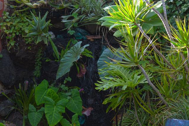 Succulent Planters contemporary-landscape