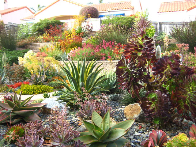 Succulent symphony contemporary landscape other for Garden design with succulents