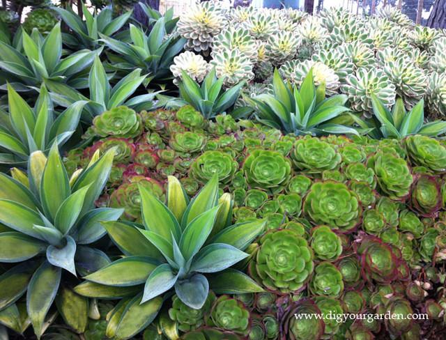 Succulents and Companion Plants Contemporary Landscape