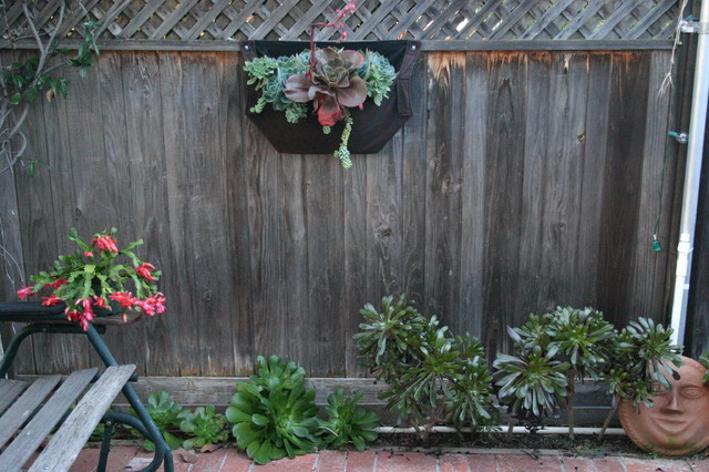 Modern Landscaping With Succulents : Succulents modern landscape san diego by carson
