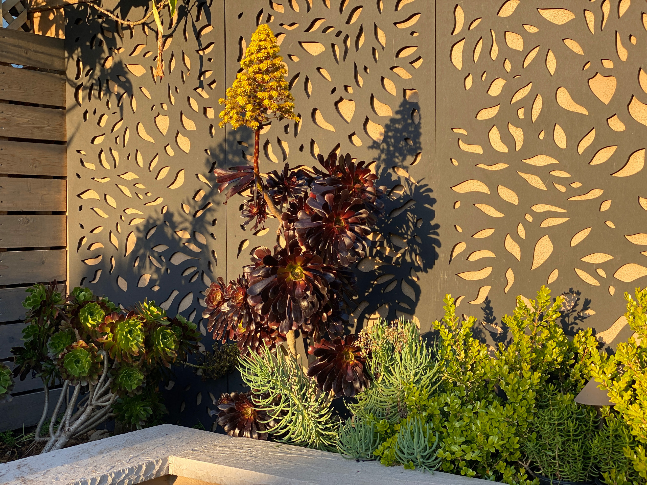 Succulents in Front of a Deco Wall Raised Garden