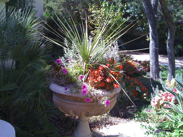 Summer Container Gardening traditional-landscape