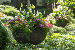 14 Beautiful Container Gardens for Shady Spots