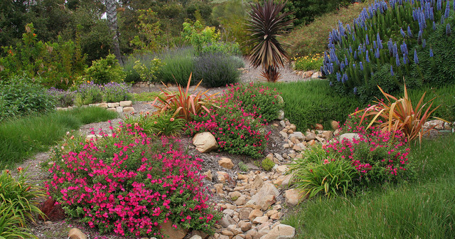 Sunny slope with drainage wash perennials and edibles for Landscape drainage slope