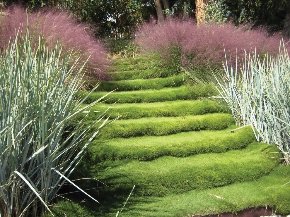 Photo of a mid-sized contemporary full sun backyard garden path in Los Angeles for fall.