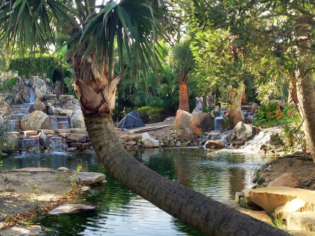 Sustainable Backyard Garden : Sustainable Backyard Haven  Tropical  Landscape  tampa  by Living