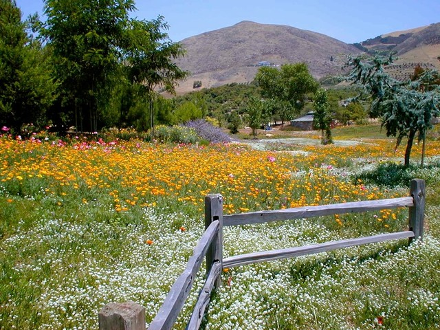 Sustainable Ranch landscape