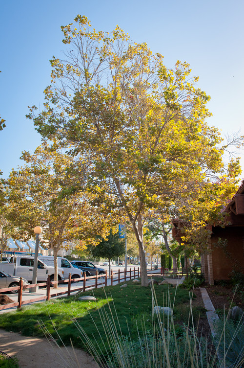 Best Trees For Privacy Shade And More You Ll Adore Realtor Com