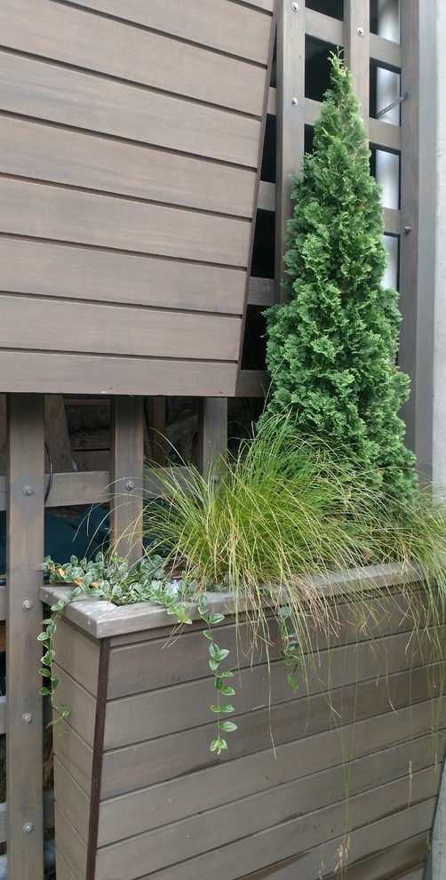 Design ideas for a contemporary drought-tolerant and partial sun side yard landscaping in Seattle for winter.