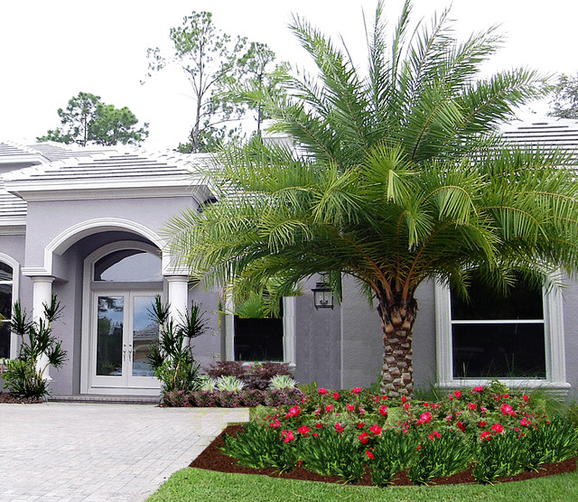 Tampa palms contemporary landscape tropical landscape for Garden design with palms