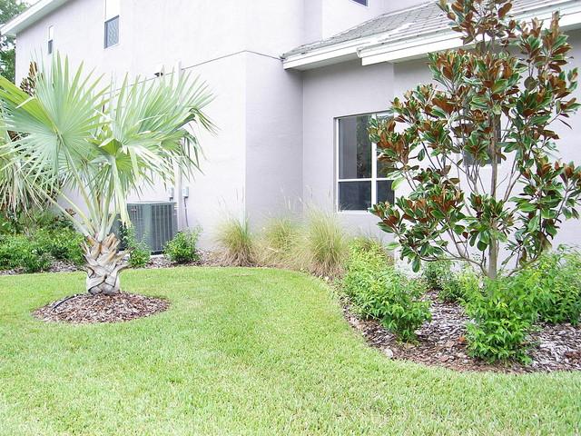 Tampa palms contemporary landscape contemporary for Landscape design tampa
