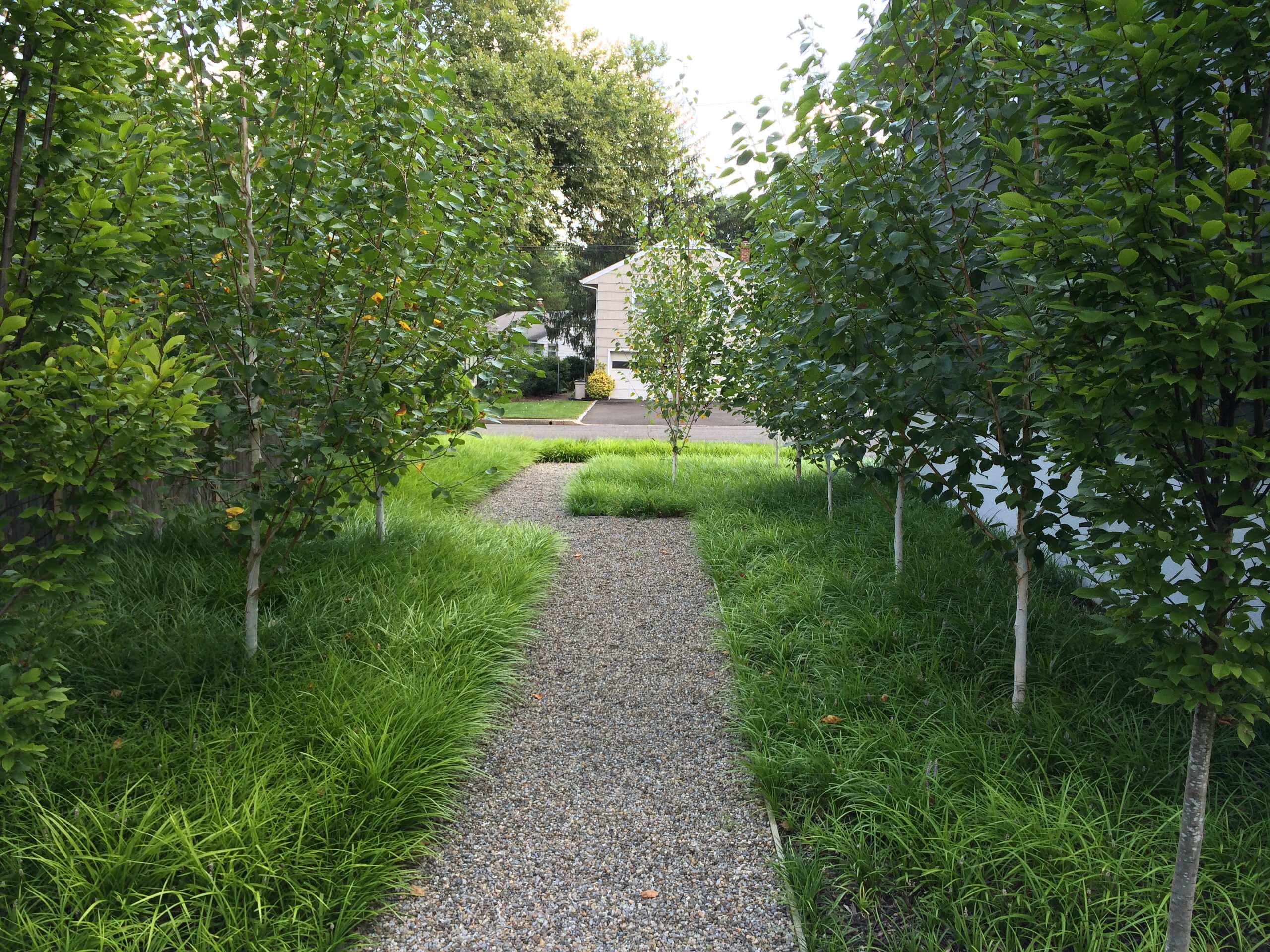 Tenafly Modern Perennial Garden