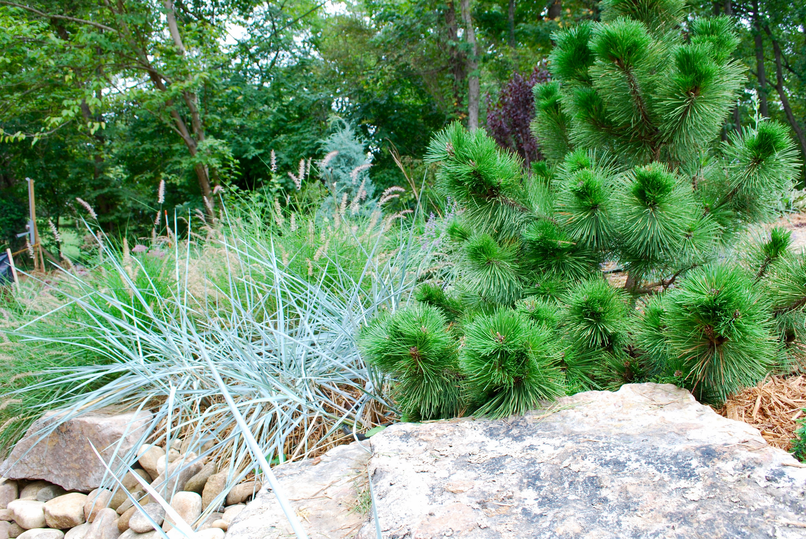 Textural backyard garden.