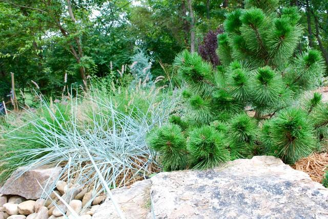 Textural backyard garden. eclectic-landscape