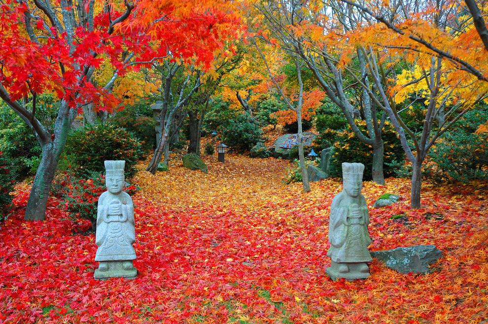 Photo of an asian landscaping in Boston for fall.