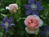Tutto Sulle Rose Inglesi e Perché Dovresti Coltivarle Anche Tu (9 photos) - image  on http://www.designedoo.it