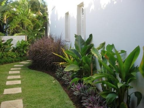 What are the purple green grass and the big palm leaf for Green plants for landscaping