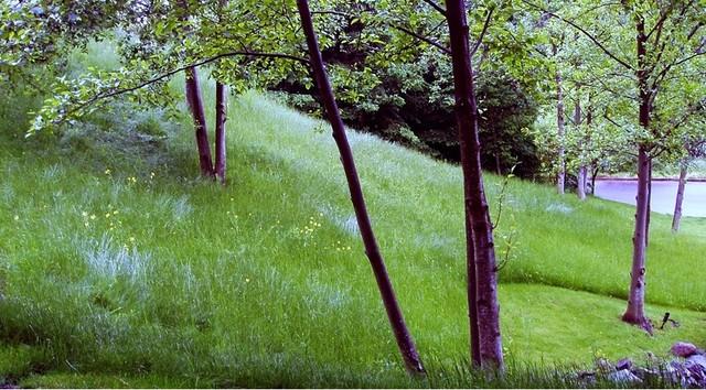 contemporary landscape by THOMAS KYLE:  Landscape Designer