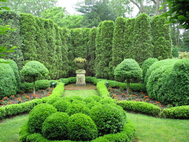 Thuja Arborvitae Fir Topiaries And Boxwood Parterres