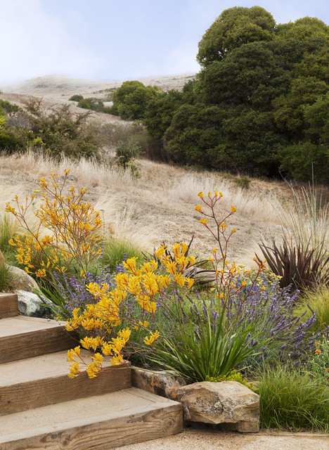 Tiburon Hillside Contemporary Landscape Other By